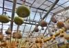 Ein Himmel voller Kalebassen.