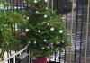 ...unterwegs den geschmückten Weihnachtsbaum (!)...